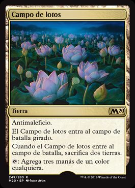 Campo de lotos / Lotus Field