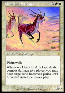 Antilope gracil / Graceful Antelope