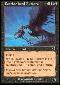 Aura calavera / Death's-Head Buzzard